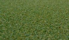 Wilton Pro Carpet